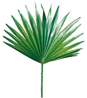 saw palmetto and dht reduction